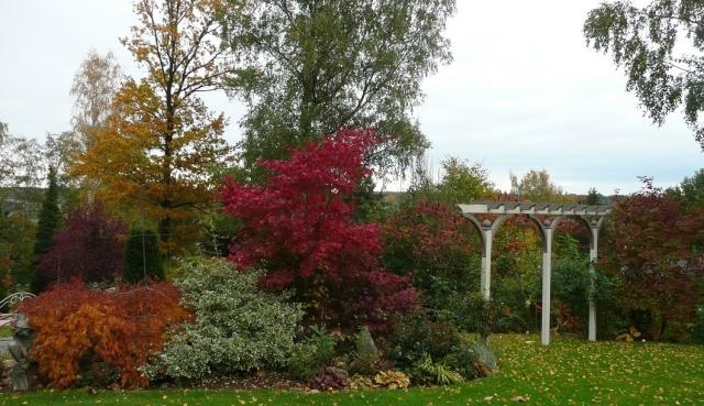 automne érables